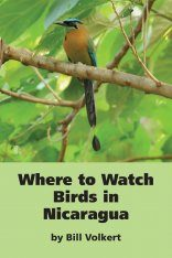 Where to Watch Birds in Nicaragua