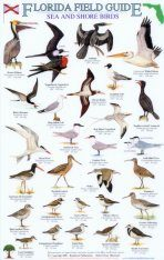 Florida Field Guide, Sea and Shore Birds