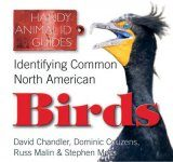 Identifying Common North American Birds