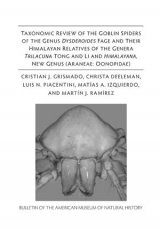 Taxonomic Review of the Goblin Spiders of the Genus Dysderoides Fage and Their Himalayan Relatives of the Genera Trilacuna Tong and Li and Himalayana, New Genus (Araneae: Oonopidae)