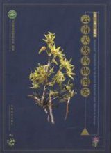 Illustrated Handbook for Medicinal Materials from Nature in Yunnan, Volume 1 [Chinese]