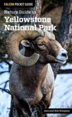 Nature Guide to Yellowstone National Park