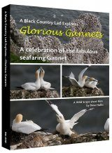 Glorious Gannets: A Celebration of our Fabulous Gannet Colonies (Region 2)