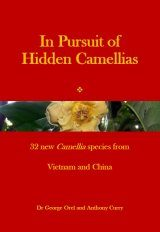 In Pursuit of Hidden Camellias