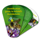 Identification guide to Ireland's Bumblebees