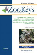 ZooKeys 567: The Genus Litophyton Forskål, 1775 (Octocorallia, Alcyonacea, Nephtheidae) in the Red Sea and the western Indian Ocean