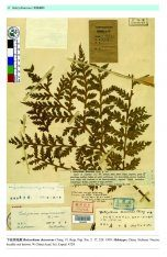 Type Specimens in China National Herbarium (PE), Volume 1: Pteridophyta (1) [English / Chinese]