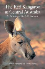 The Red Kangaroo in Central Australia