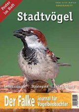 Stadtvögel [Urban Birds]