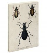 Beetle Journal