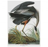 Blue Heron Tea Towel