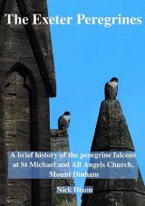 The Exeter Peregrines