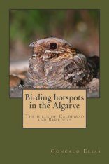 Birding Hotspots in the Algarve: The Hills of Caldeirão and Barrocal