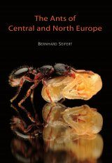 The Ants of Central and Northern Europe