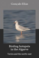 Birding Hotspots in the Algarve: Tavira and the North-East