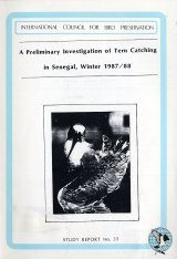 A Preliminary Investigation of Tern Catching in Senegal, Winter 1987/88