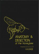 Anatomy & Dissection of the Honeybee