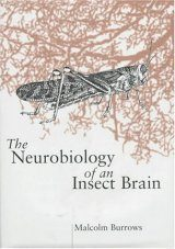 The Neurobiology of an Insect Brain
