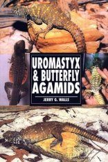 Uromastyx and Butterfly Agamids