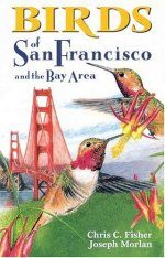 Birds of San Francisco