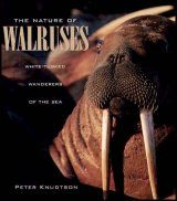 The Nature of Walruses