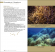 Marine Plants of the Canary Islands