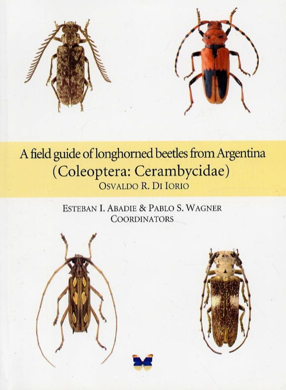 North American Beetles - InsectIdentification.org