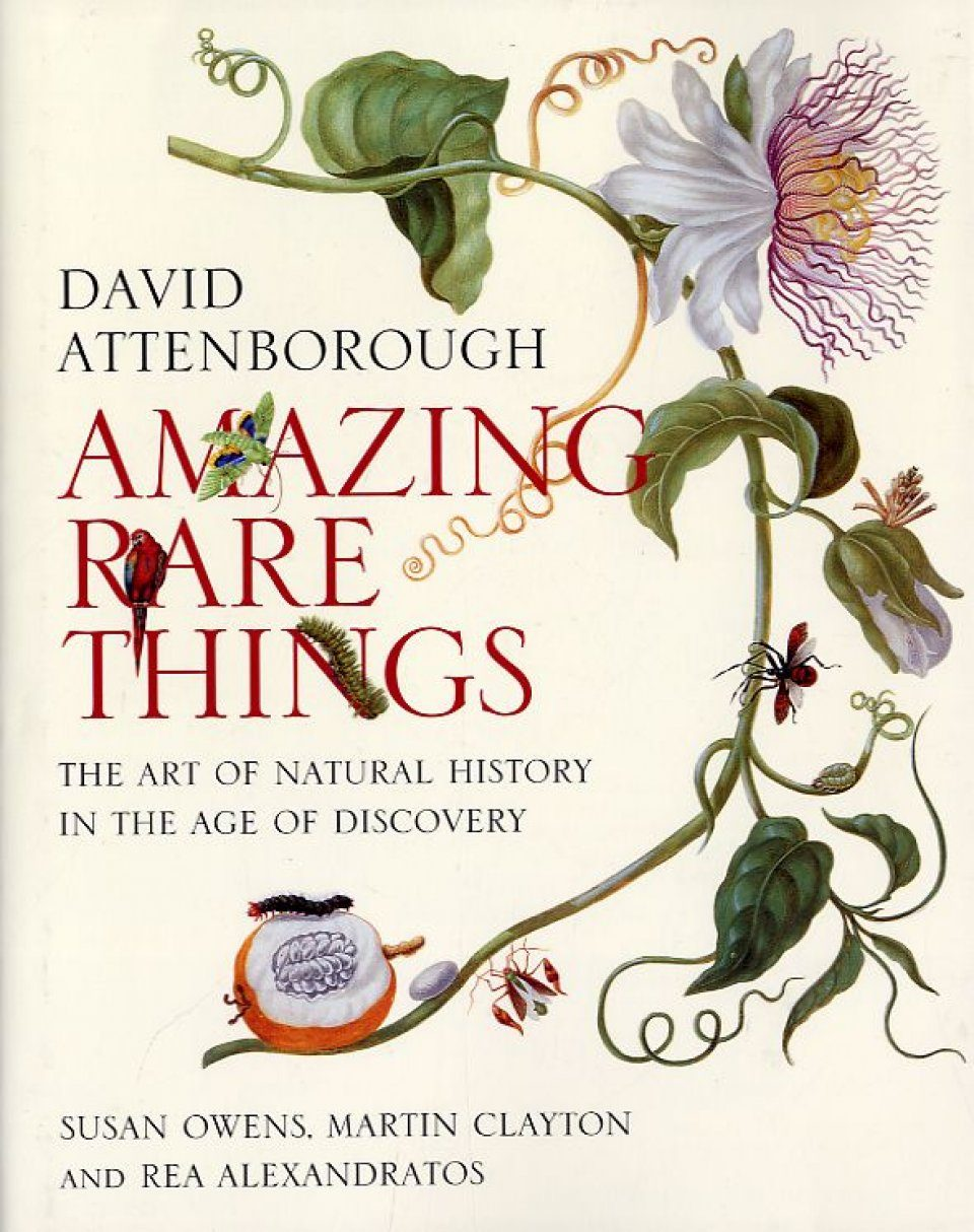 Amazing Rare Things The Art of