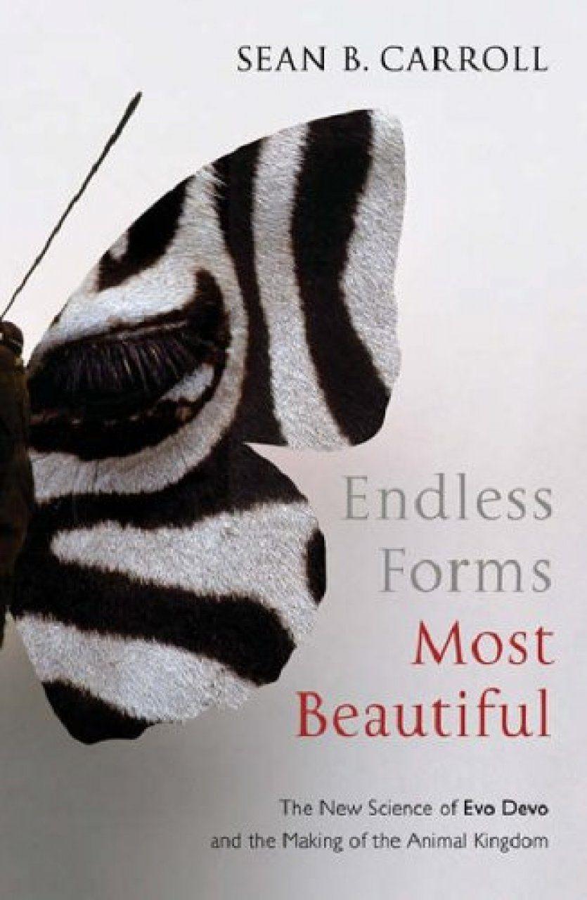 endless forms most beautiful by sean Evolution: constant change and common threads lecture one — endless  forms most beautiful sean b carroll, phd 1 start of lecture one (00:17).
