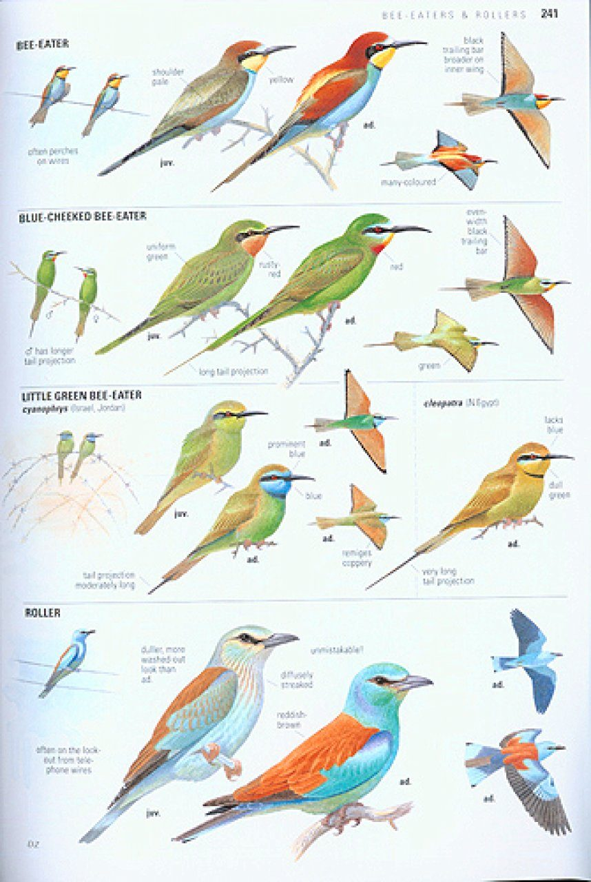 Collins Bird Guide: The Most Complete Guide to the Birds ...