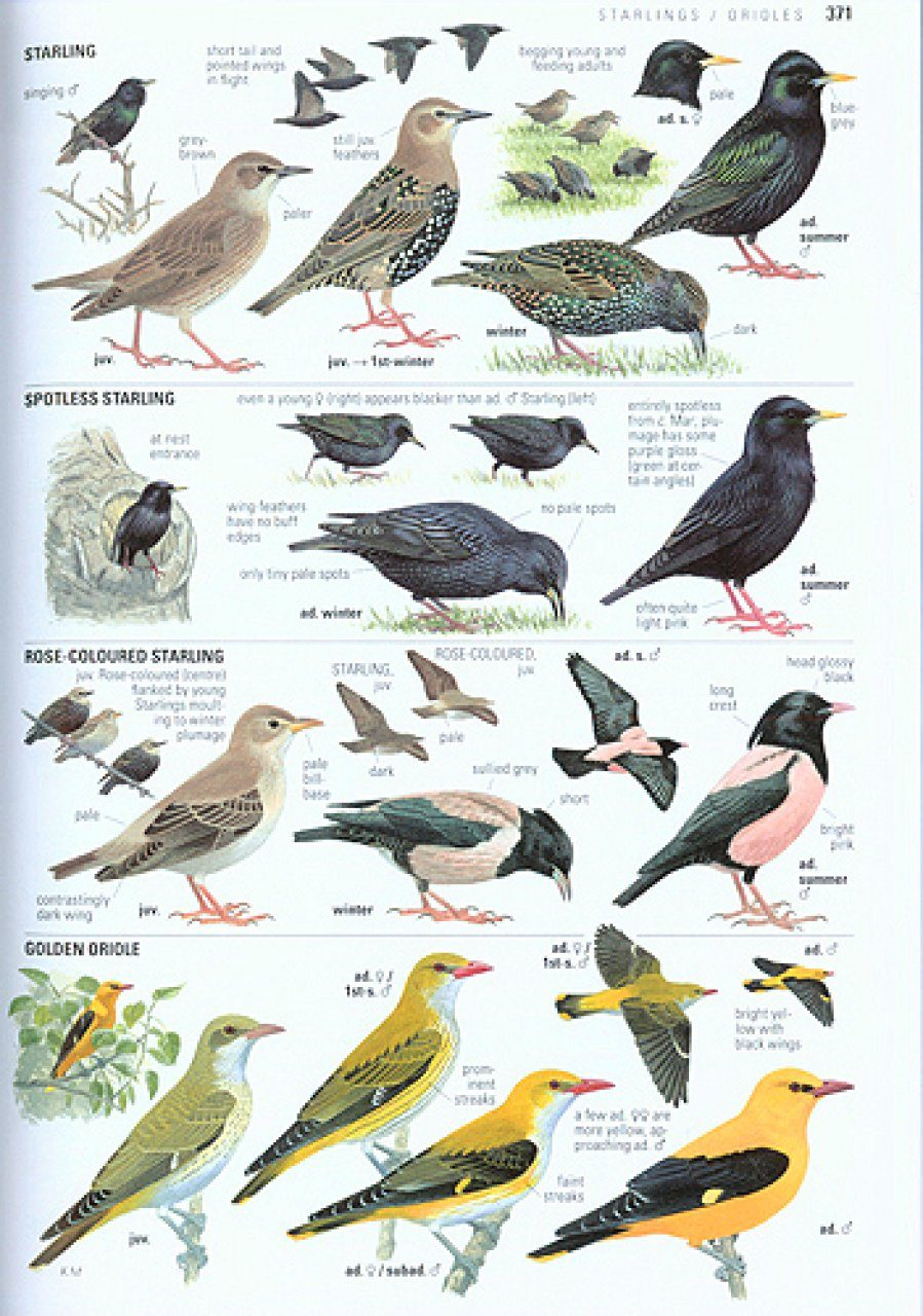 Game On: A Guide To Britain's Wild Birds - Great British Chefs