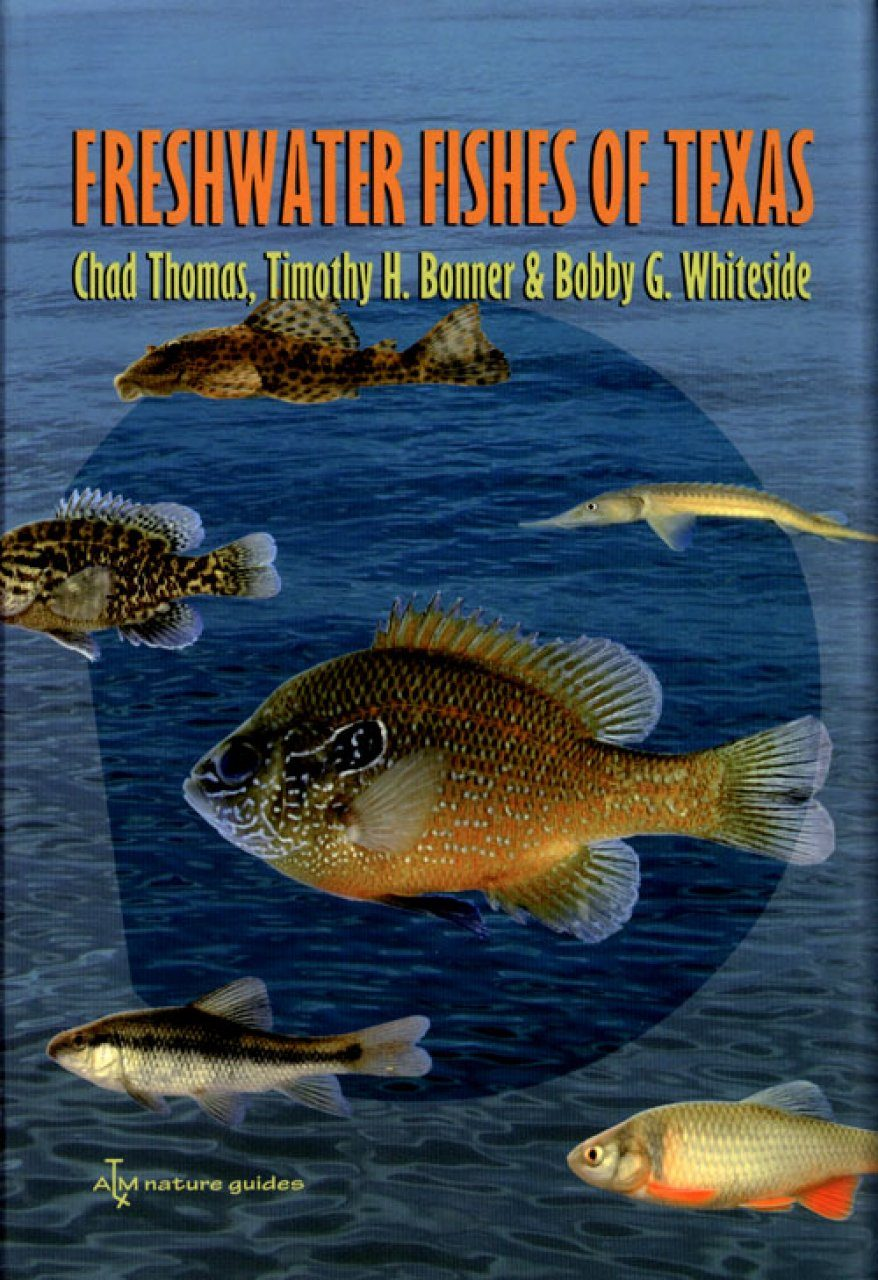Freshwater fishes of texas a field guide chad thomad for Freshwater fish guide