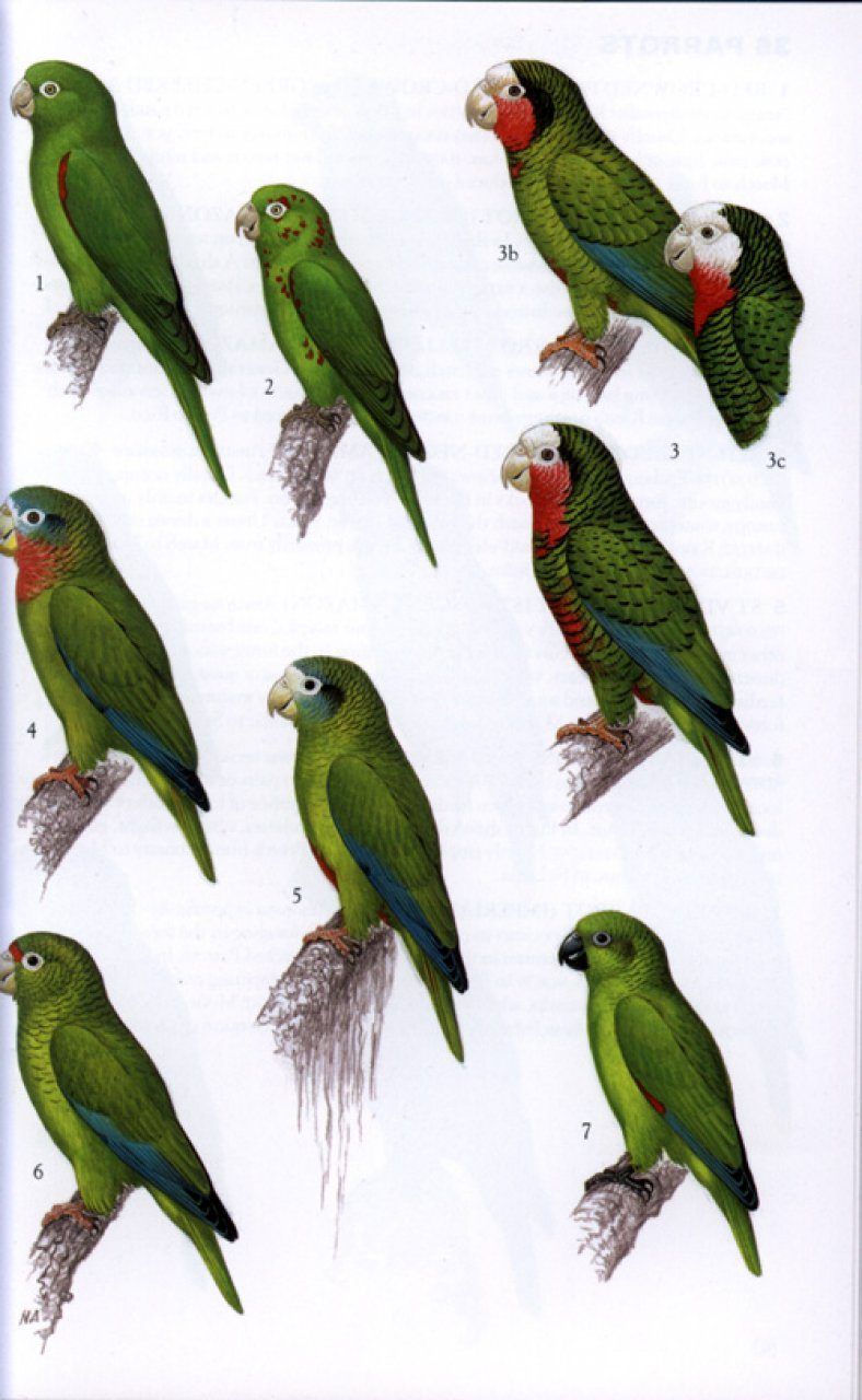 A Birder's Guide to the Bahama Islands: Anthony W. White ...