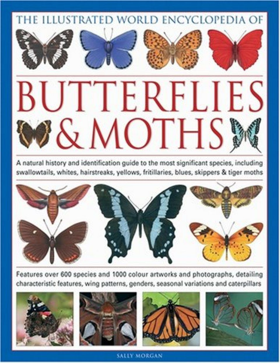 Butterflies -- identification guide -- Discover Life