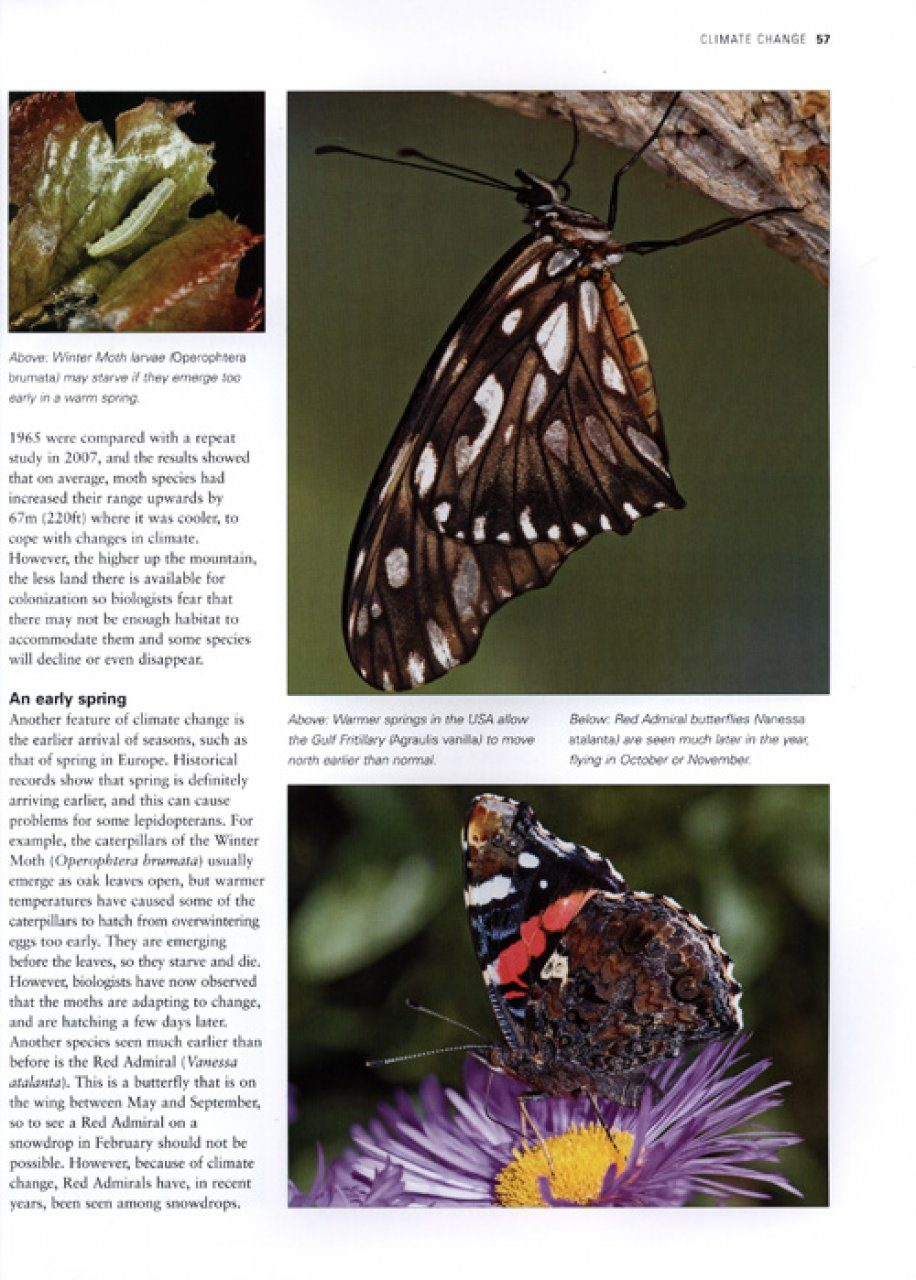 The Illustrated World Encyclopaedia of Butterflies and Moths: Sally Morgan | NHBS Book Shop - photo#30