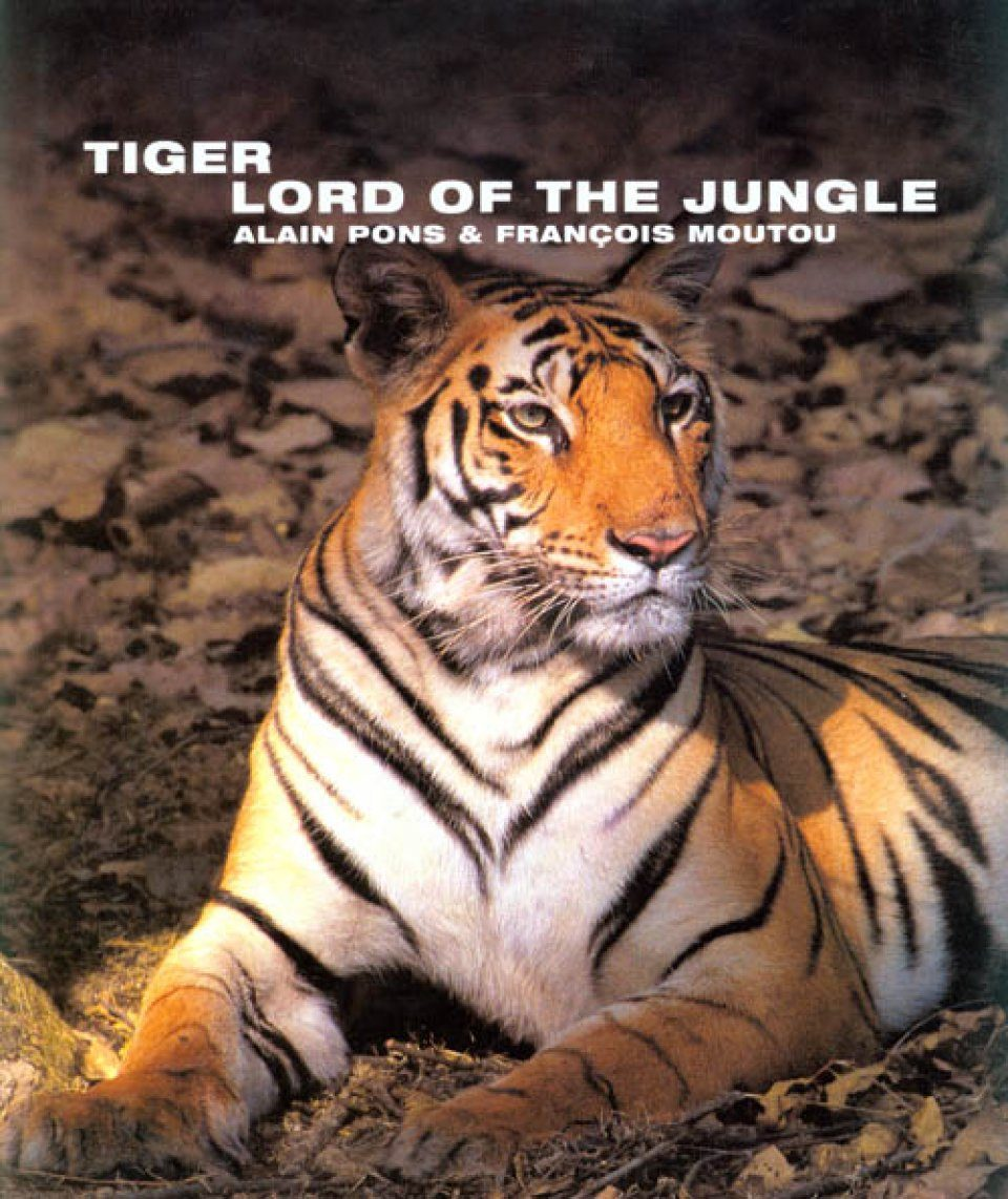tiger the lord of the jungle alain pons fran ois moutou nhbs book shop. Black Bedroom Furniture Sets. Home Design Ideas