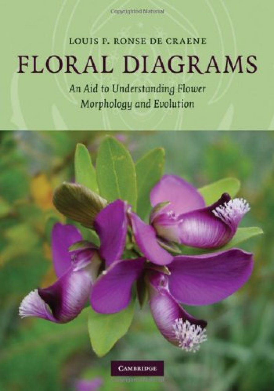 Floral Diagrams  An Aid To Understanding Flower Morphology