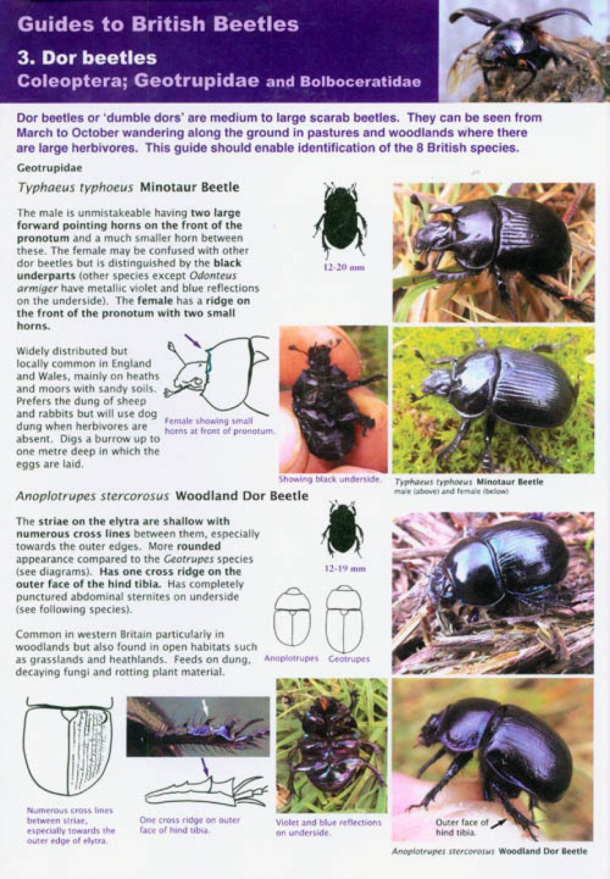 10 Fascinating Facts About Beetles - ThoughtCo