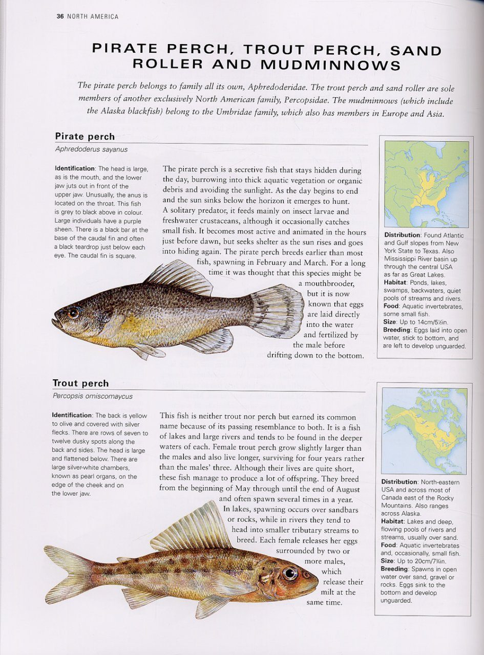 Freshwater fish of southern africa -  The Illustrated Guide To Freshwater Fish And River Creatures