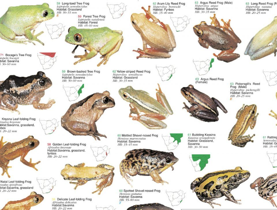 Frogs Natural History