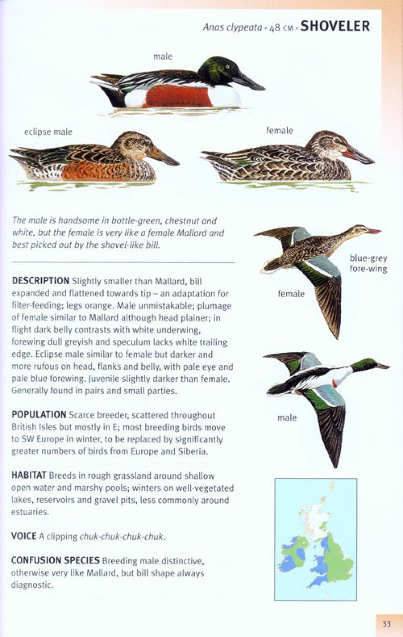 An Identification Guide to the Birds of Britain and Ireland