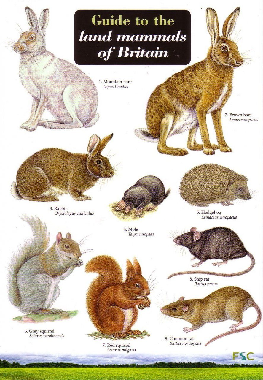 Guide to the Land Mammals of Britain: Rebecca Farley-Brown ...