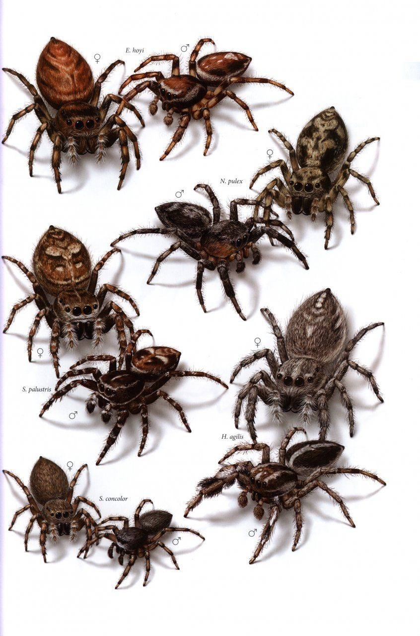 N Spiders Common Spiders ...