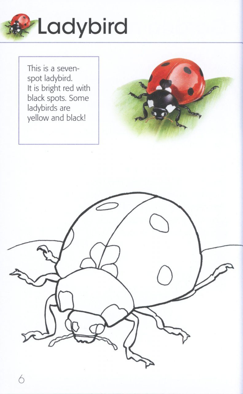 bird coloring pages rspb shop - photo#12