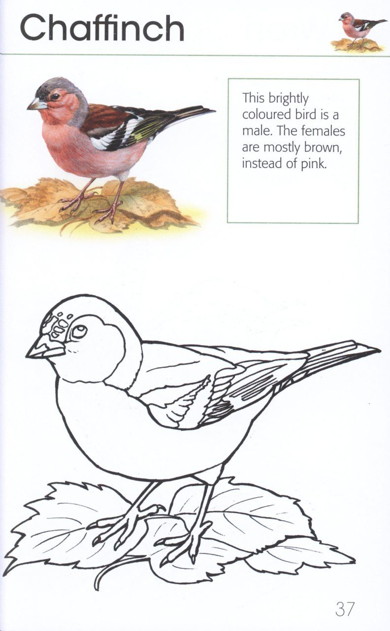 bird coloring pages rspb shop - photo#2