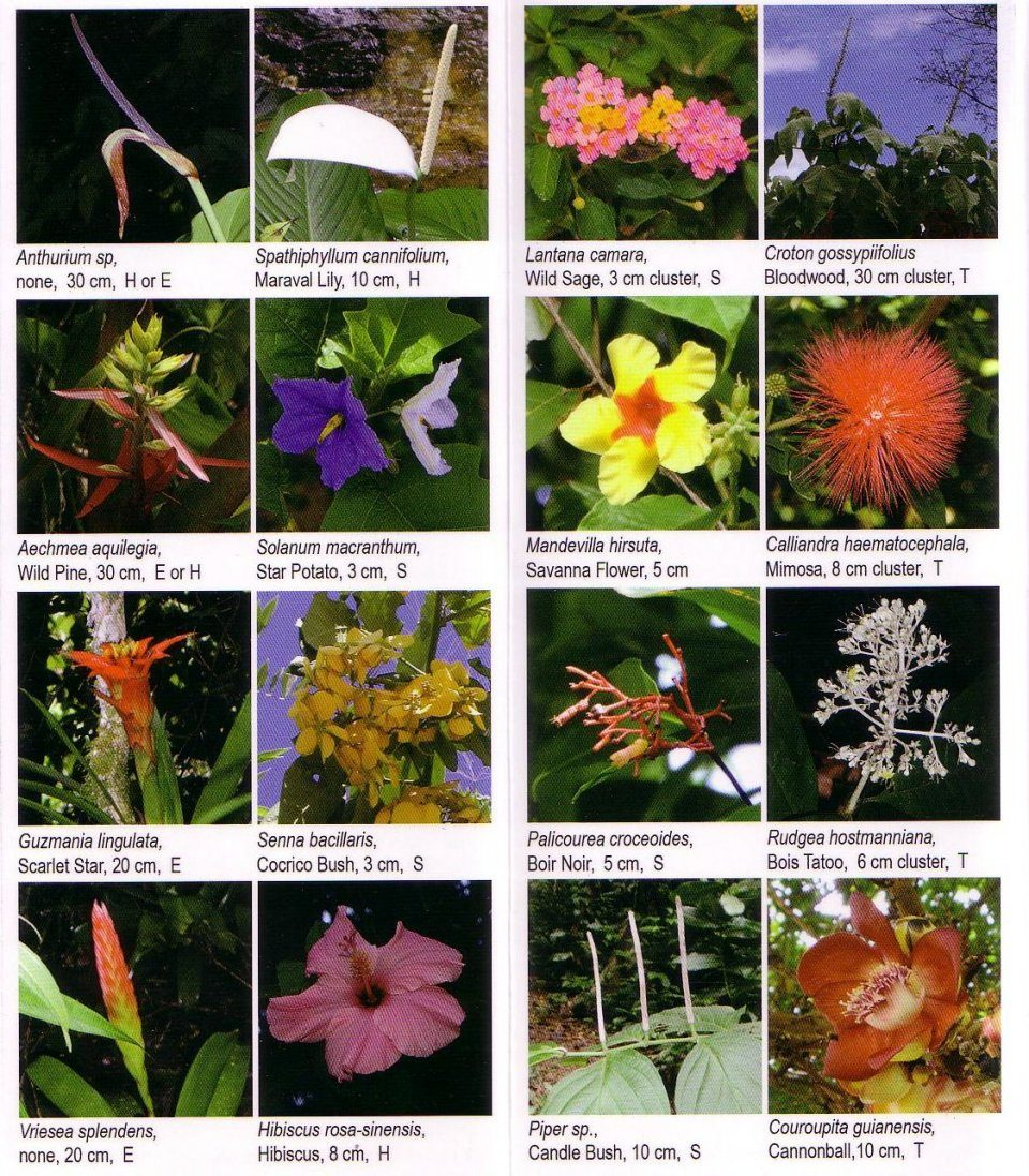 Field Guides: Trinidad And Tobago: Wildflower Guide: Bonnie J Tyler