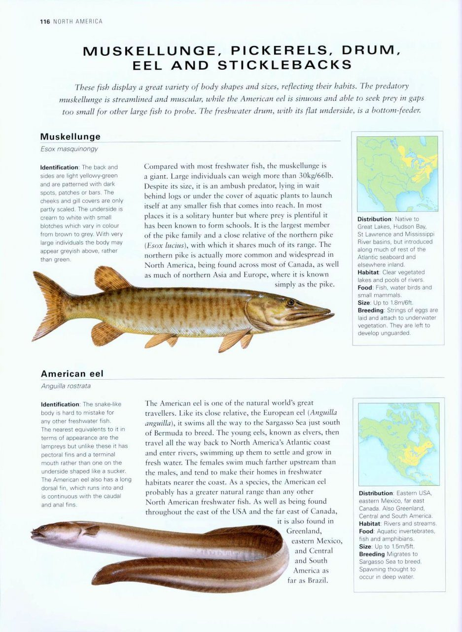 The complete illustrated world guide to freshwater fish for Freshwater fish guide