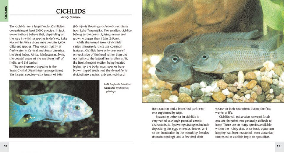 500 Freshwater Aquarium Fish A Visual Reference To The