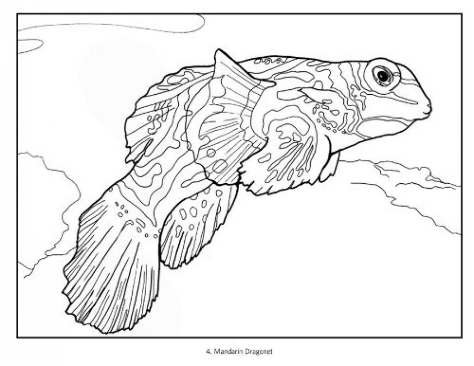 Tropical Fish Coloring Book: Susan Koop, Alf Jacob Nilsen