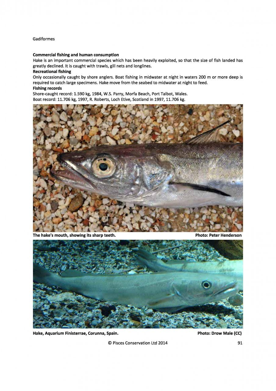 Identification guide to the inshore fish of the british for How much is a fishing license in new mexico